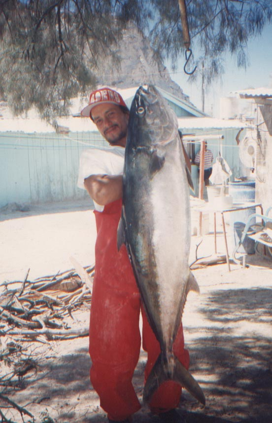 Yellowtail fish pictures and species identification