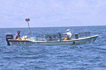 Endangered Totoaba Left High and Dry in Mexico's Sea of Cortez