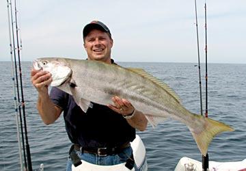 Mulege Yellowtail Go On Winter Chew Mexico Fishing News