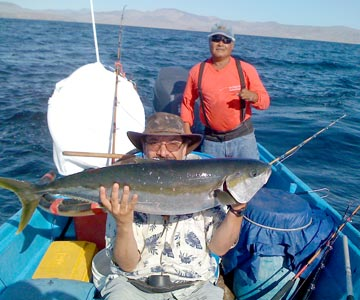 Summer yellowtail and whale sharks present in bahia de los for Los angeles fishing charters